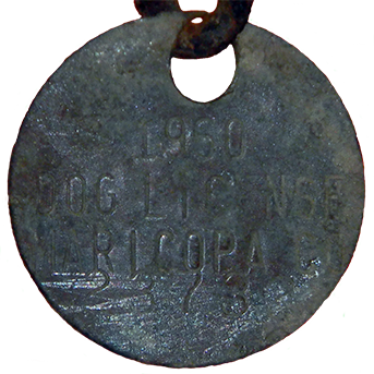 1960 Maricopa Co Dog Tax Tag